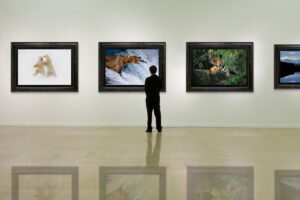 Person viewing framed Mangelsen images in a gallery.